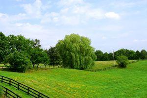 Виды обременения земельных участков