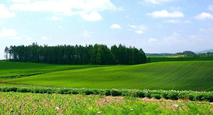 Виды стоимости земельных участков