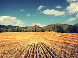 Покупка и продажа земель сельскохозяйственного назначения