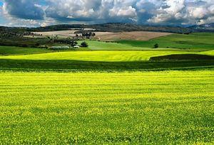 Правила оценки земель сельхозназначения