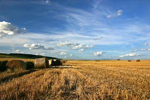 Что такое земли сельхозназначения