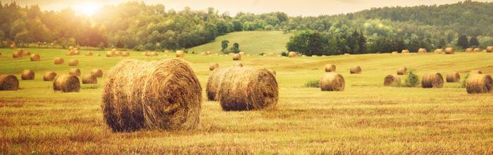 Оценка стоимости земель сельхозназначения