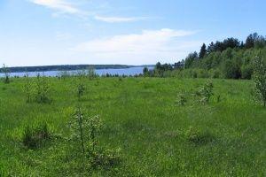 Способы покупки земли у государства