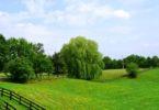 Как правильно купить земельный участок у администрации района и муниципалитета