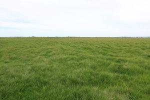 Оформление в собственность земельного участка, купленного у государства