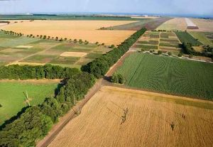 Порядок продажи земель сельхозназначения