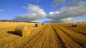 Законы РФ о продаже земель сельскохозяйственного назначения