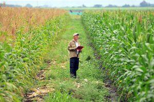 Категории земель сельхозназначения