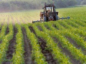 Как можно использовать земли сельскохозяйственного назначения