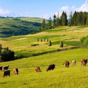 Перевод земель сельхозназначения