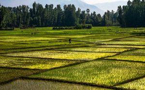 Как получить выписку из похозяйственной книги о наличии права на земельный участок